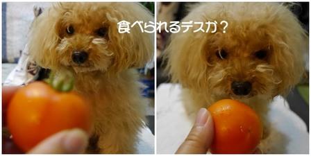 レオンとトマト.jpg