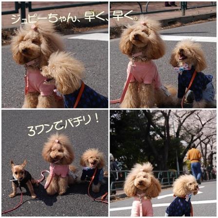 3わんs.jpg