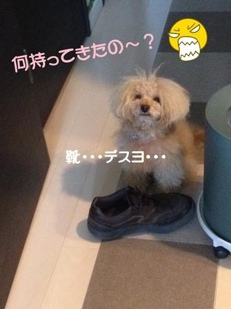 IMG_8546 くつ.JPG