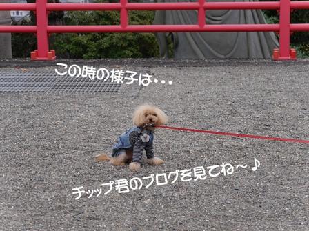 P1150578すわりこみ.JPG