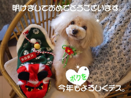P1240148oshougatu.JPG