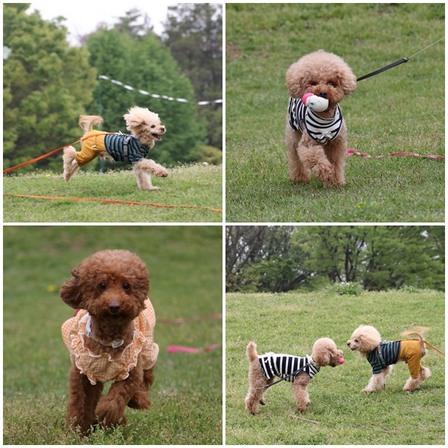 dogs.jpg