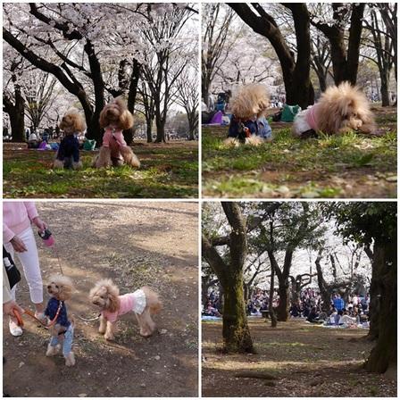 yoyogi park.jpg